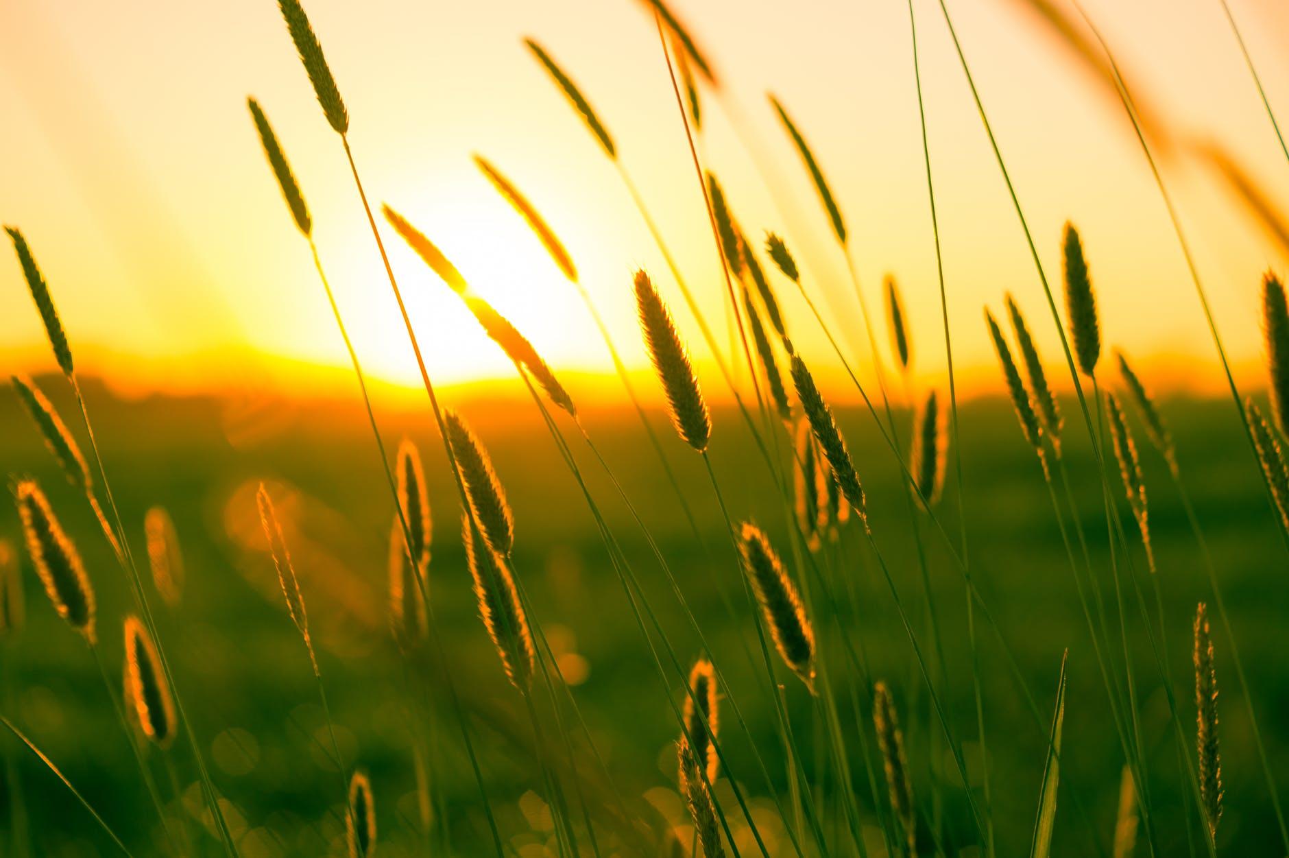summer sun warmth field